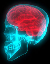 Photos of a human brain.