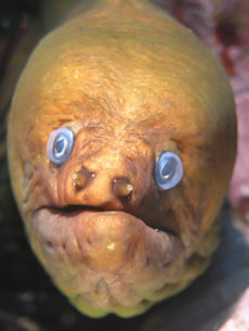 this is a photo of an electric eel