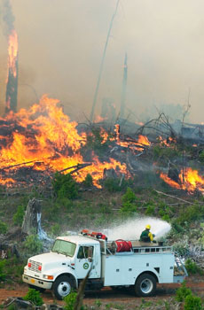 This is a picture of a forest fire.